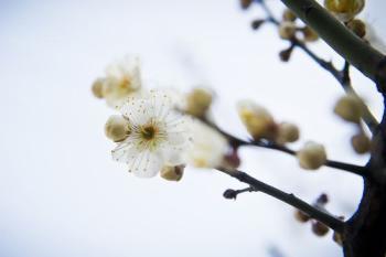 [ 김경록 기자의 '작은 사진전' ] 꽃샘추위와 봄꽃