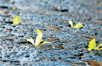 [남은 이야기] 상추 싹입니다, 봄입니다