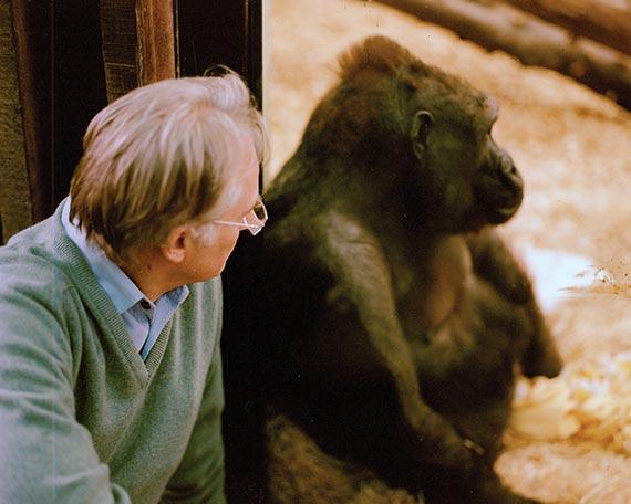 영국 채널4에서 방송된 다큐멘터리 '찰스 다윈의 천재성' 촬영 중 고릴라를 바라보고 있는 도킨스.