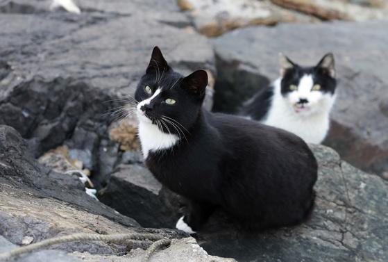 경남 통영 욕지도에 완연한 봄이 찾아왔다. 목과마을에 사는 고양이는 방파제나 어부림에 누워 봄볕을 쬔다.