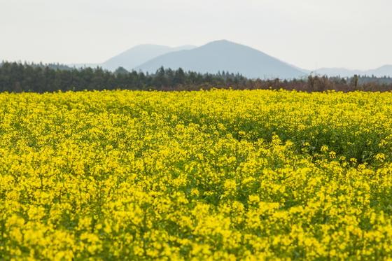 대록산의 봄 풍경.
