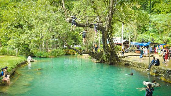 라오스 방비엥 액티비티 중 가장 짜릿했던 나무 위에서 다이빙 하기.
