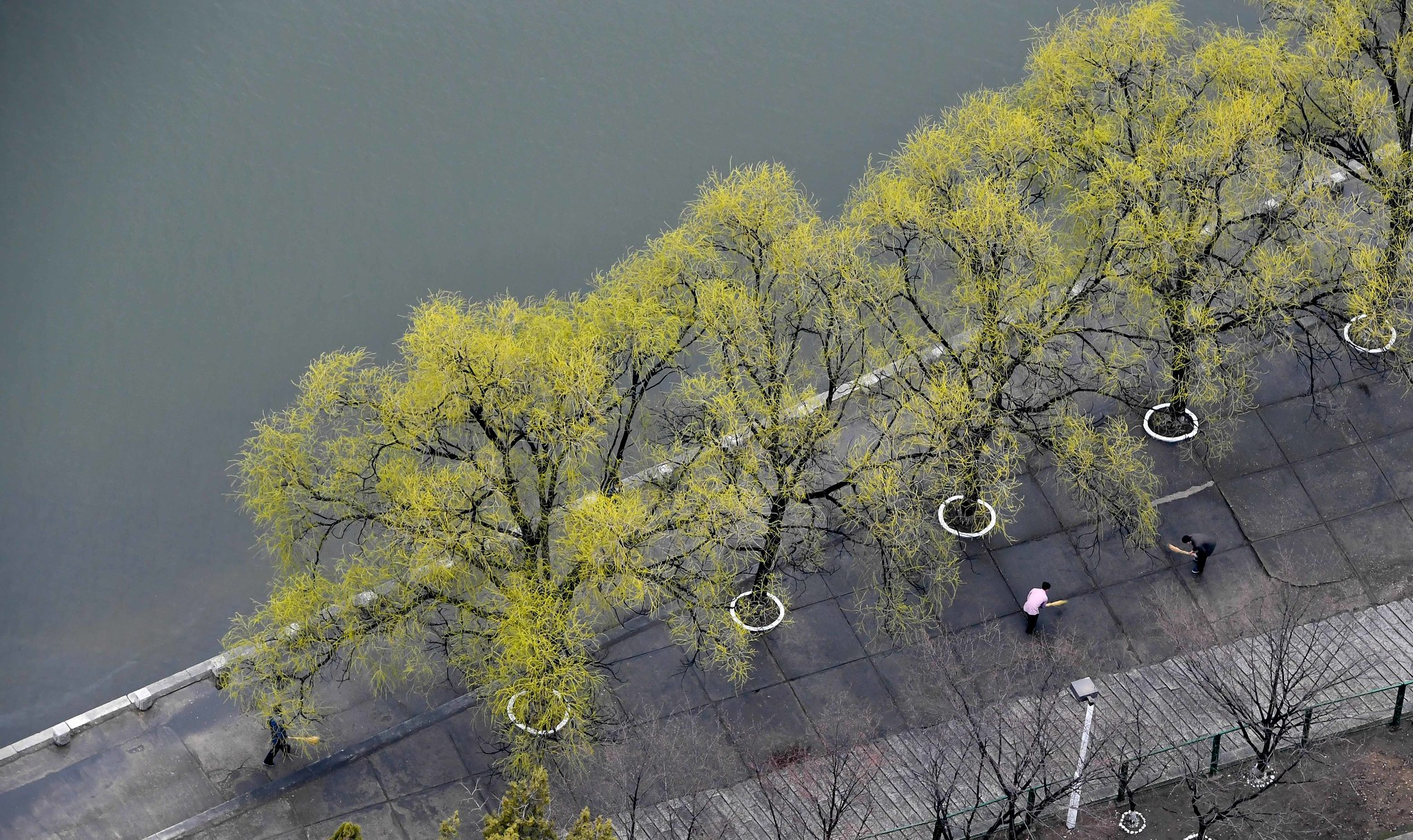 6일 완연해진 봄날씨에 대동강 양각도 호텔 인근에서 시민들이 청소를 하고 있다. 사진공동취재단