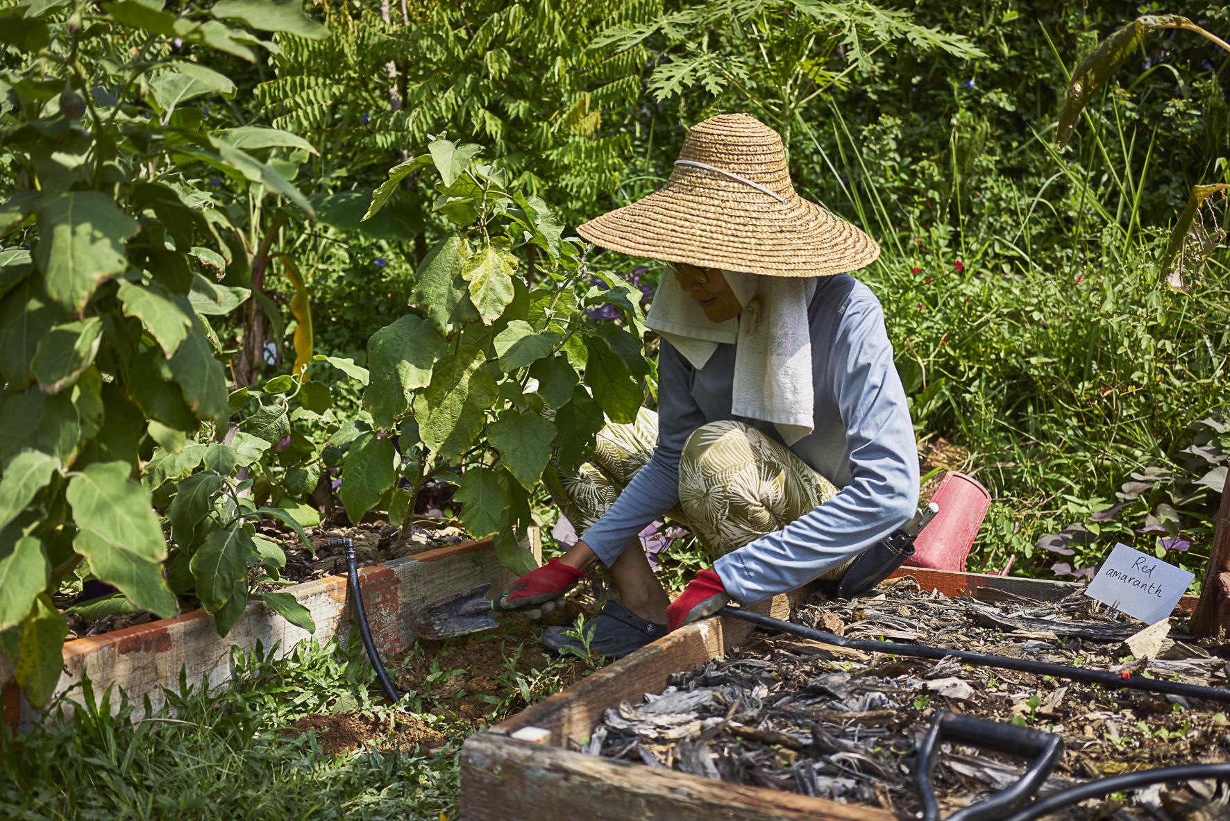 레스토랑 농장에서 채소를 재배하는 모습