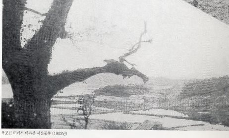 1902년 목포진에서 바라본 서산동 방향. 중간의 논은 바다 만수위보다 1~2m 낮은 지역도 있었다. 간척과 매립으로 택지를 만들어 원도심을 건설했다.<사진=목포시청 홈페이지>