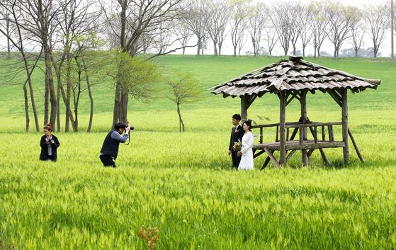 19일 전북 고창군 공음면 청보리밭. 한 커플이 원두막을 배경 삼아 사진을 찍고 있다. 프리랜서 장정필