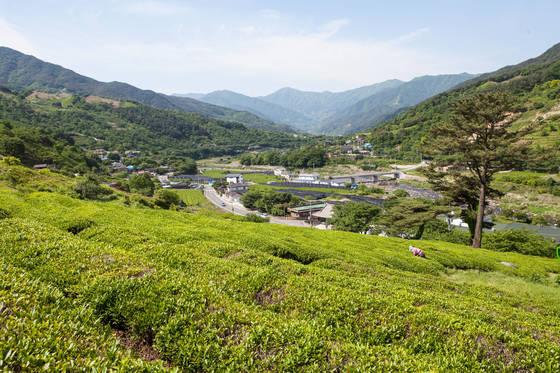 차밭에서 내려다본 정금마을 풍경. 화개천과 지리산, 차밭이 어우러진 온통 초록빛 세상이다.