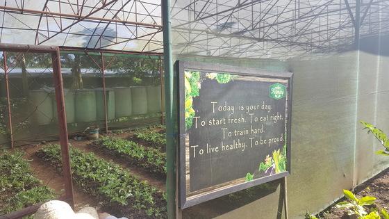 너처 웰니스 빌리지가 운영하는 농장 속 온실. 10분 떨어진 농장에서 키운 채소를 손님들 식탁에 올린다.