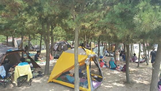 다대포 해수욕장의 숲에서 관광객들이 텐트를 치고 쉬고 있다.[사진 부산 사하구청]