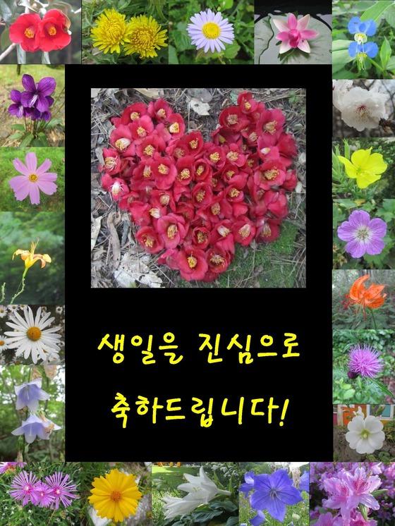 김진국 교수는 길을 걷다가 예쁜 꽃을 보면 사진을 찍어 생일을 맞은 환자에게 보낸다. [사진 순천향대 부천병원]