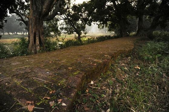 네팔 땅에 있는 카필라바스투 성의 성벽터. 아직도 흙과 수풀에 성벽의 상당 부분이 묻혀 있다.