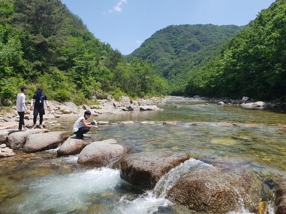 금강산에서 시작된 물이 흐르는 두타연 상류에 있는 징검다리. 박진호 기자