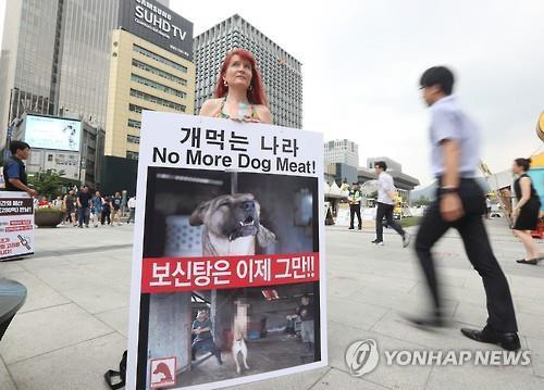 2016년 영국 내에서 한국인의 개 식용에 대한 반대 여론이 거세지자 영국 여성은 한국 광화문 광장에서 피켓시위를 벌였다. [연합뉴스]