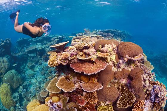 세계에서 가장 큰 산호초 지대인 호주의 그레이트 배리어 리프. 호주 쿡 대학교 연구진에 따르면 지난 2016년 발생한 해양열파로 이 지역의 산호초가 심각한 타격을 입었다. 산호초는 조류와 공생해 해양생태계를 유지하는 만큼, 산호가 파괴되면 어족자원이 심각한 영향을 받을 수 있다. [중앙포토]