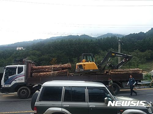 영주국유림관리소, 소나무 무단반출 40대 2명 입건