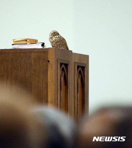 남가주샬롬교회 송구영신 예배에 날아든 새