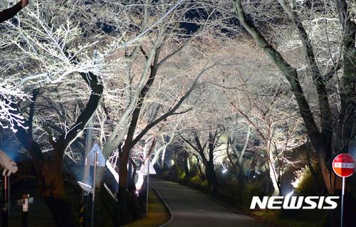 아름다운 하동 벚꽃길