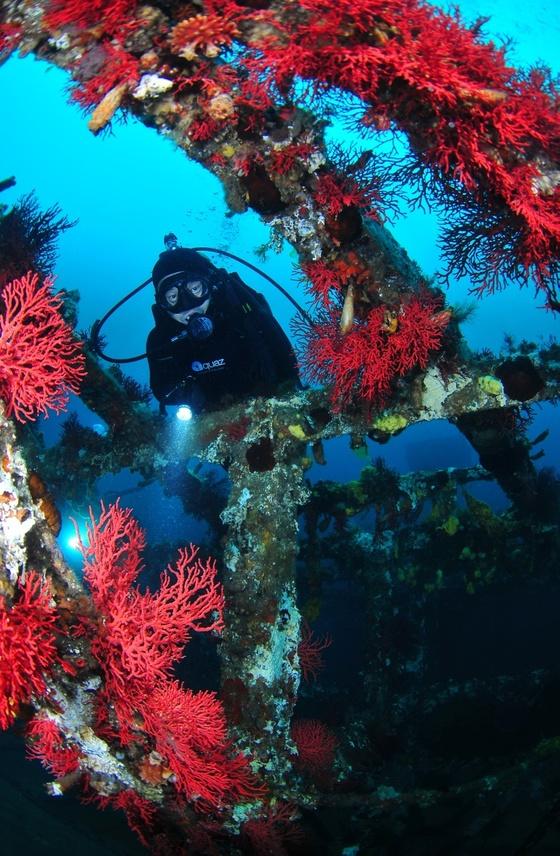 침몰한 선박은 고기들의 안식처로 활용되고 다이버의 좋은 구경거리도 된다.[사진 박동훈]