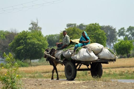 소가 끄는 수레에 짐을 가득 싣고 가는부부. 하층민의 삶은지금도 고달프다.