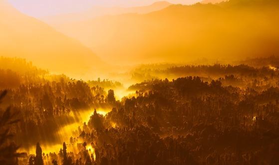 2600년 전 인도의 자연은 거칠고 험악했다. 숲에는 호랑이를 비롯한 맹수들도 많았다. 싯다르타는 그 속으로 들어가 수행자의 삶을 살고자 했다.