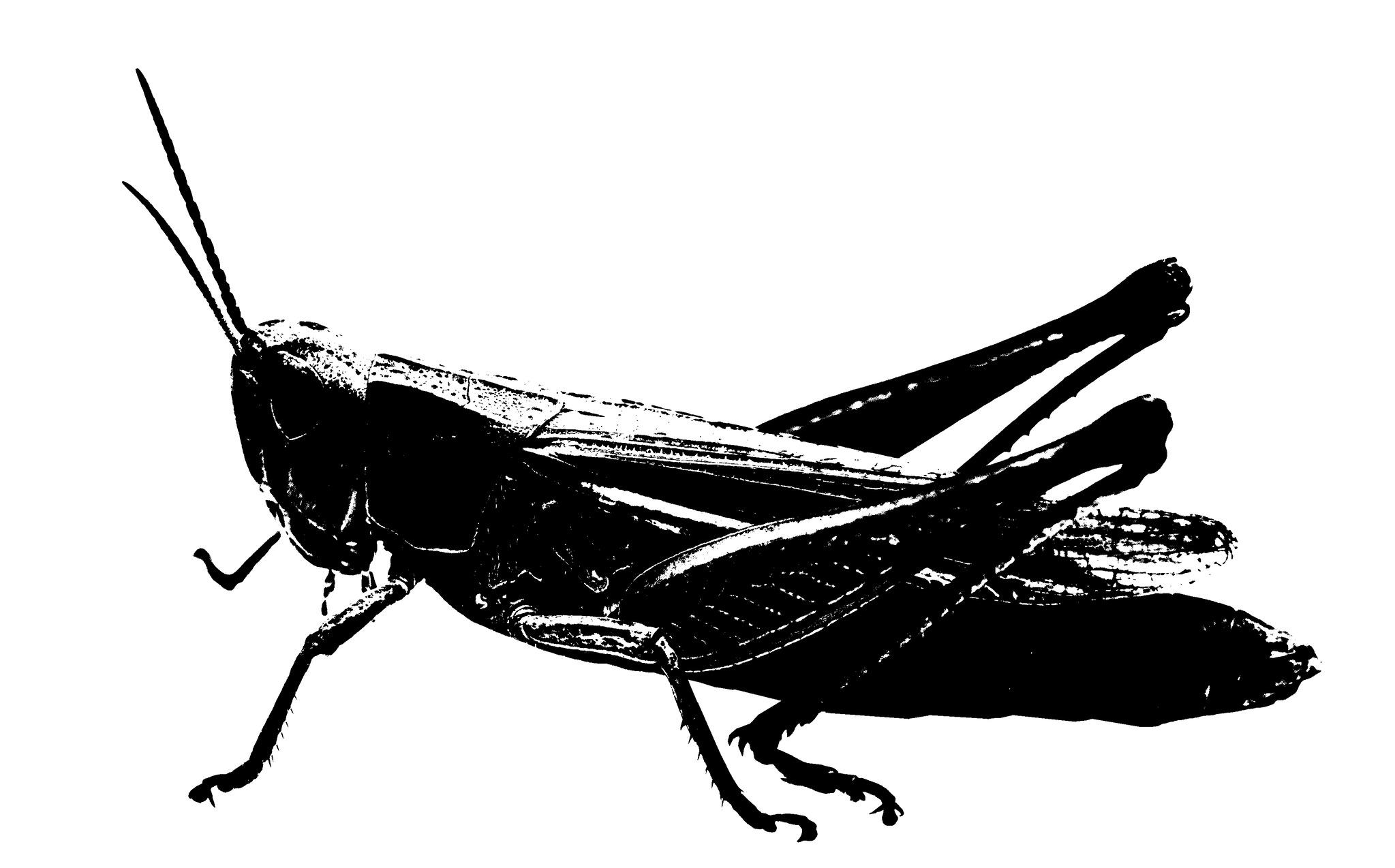 메뚜기 [중앙포토]