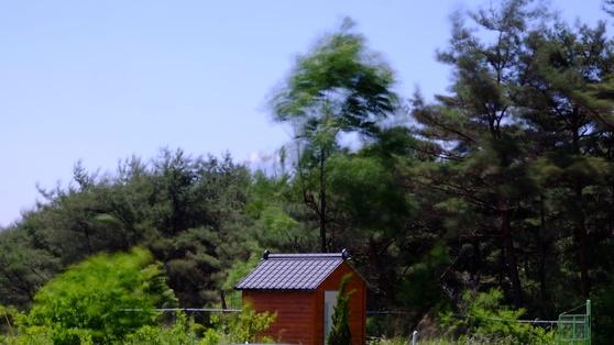 어지러운 내 마음처럼 여린 바람에도 휘청대고 있는 마당의 가죽나무. [사진 조민호]