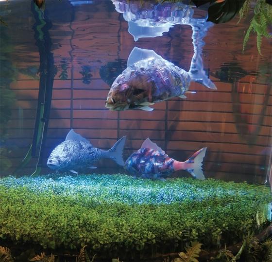 헨나호텔 로비에 있는 수족관에서는 로봇 물고기 마이로가 헤엄치고 있다.