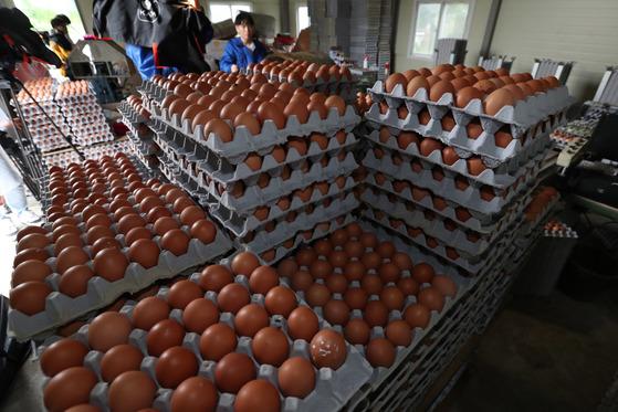 15일 오후 살충제 성분이 발견된 경기도 남양주의 '마리' 양계농가'창고에 출하가 보류된 계란들이 쌓여있다. 최승식 기자