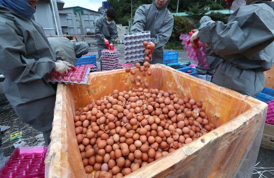 경기도 남양주시 공무원들이 15일 오후 살충제 성분인 피프로닐이 검출된 마리농장 '08마리' 계란을 수거해 폐기하고 있다. [최승식 기자]