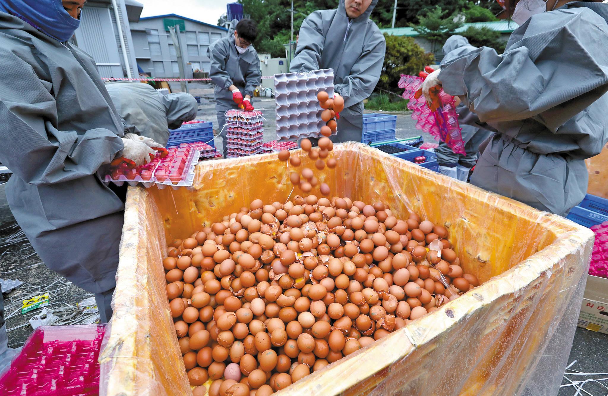 부적합 판정을 받은 계란들이 폐기되고 있다. [사진 중앙포토]