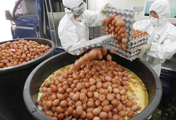 살충제 성분인 '비펜트린'이 허용 기준치(0.01mg/kg)를 초과해 검출된 경북 칠곡군 산란계 축산농가 3곳의 계란을 17일 오후 군청 관계자들이 수거해 마을창고에서 전량 폐기하고 있다. 비펜트린은 A농가에서 0.03mg/kg, B농가 0.045mg/kg, C농가 0.016mg/kg가 각각 검출됐다. 프리랜서 공정식