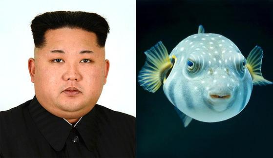 복어 관상, 사자 관상을 함께 지닌 북한 김정은.