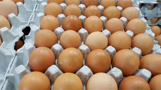제주에 유통된 살충제 오염 계란. '08광명농장'이란 표기가 찍혀있다. [사진 제주도]