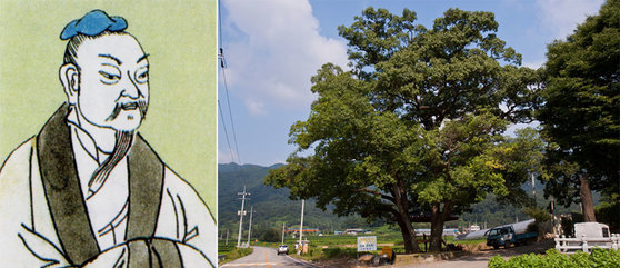 장자(왼쪽)와 상수리 나무(오른쪽). [중앙포토]