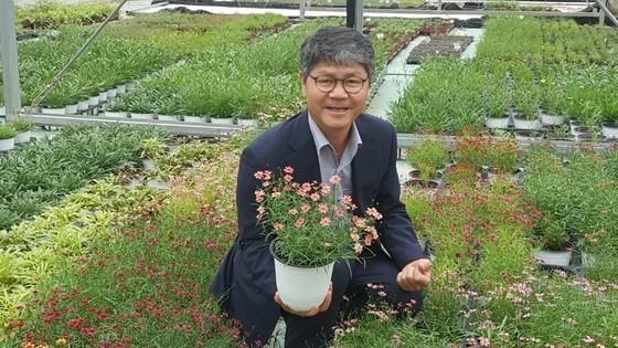 박공영 우리꽃영농조합법인 대표가 자신이 개발한 코레우리 화분을 보여주고 있다. 북미가 원산지인 코레옵시스를 개량한 우리 꽃인데 색상이 다양해 유럽이나미국·일본 등 해외에서 인기다. [최모란 기자]