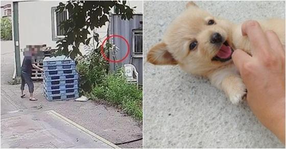 내던져진 강아지(왼쪽)과 이 강아지가 살아있을 때 모습. [연합뉴스]