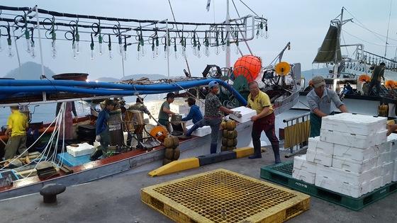 지난 9일 오전 6시 충남 태안군 근흥면 신진도항에서 오징어잡이 배 선원들이 선어(얼음을 채운 상태의 오징어)를 하역하고 있다. 신진호 기자