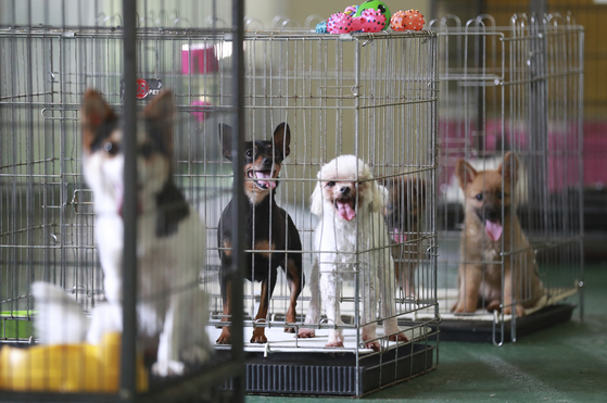 지난 8월 3일 경기도 남양주시 동물보호소에서 유기견들이 철창 안에 있다. 임현동 기자