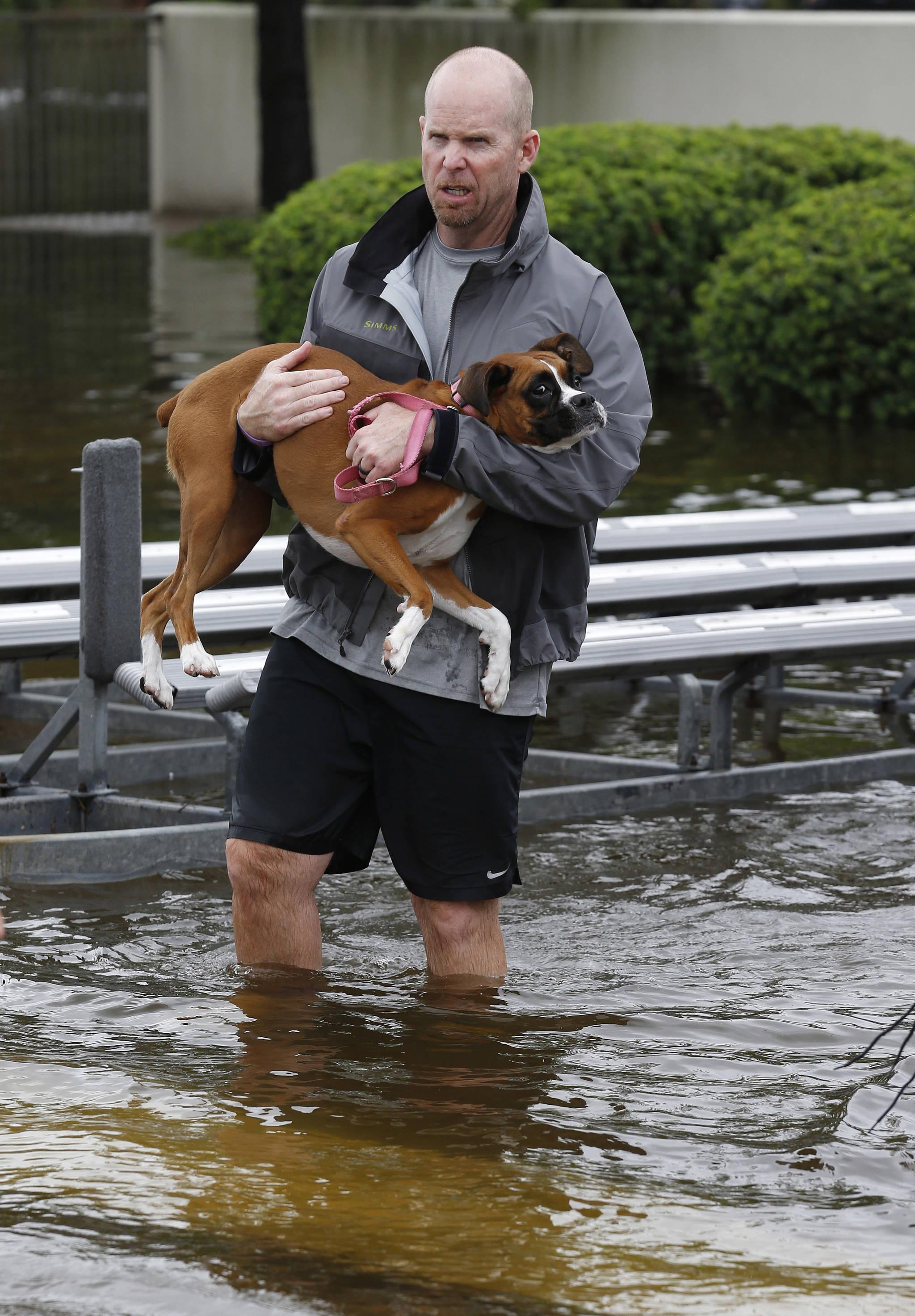 27일(현지시간) 미국 텍사스(Texas)주 갤버스턴카운티(Galveston County)에 있는 리그시티에서 한 남성이 반려견을 안고 물에 잠긴 자신의 집에서 탈출하고 있다.[AP=연합뉴스]