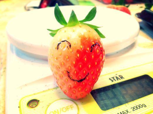청년농사꾼 권두현의 딸기.