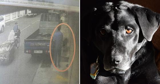 피의자 A(54)씨가 도로에서 발견한 래브라도 리트리버를 차에 싣고 가려는 장면. [사진 부산지방경찰청 제공=뉴스1]