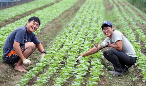 충남 홍성군 홍동마을 문당리의 한 비닐하우스에서 귀농 청년 이신웅씨(26·왼쪽)와 이씨의 멘토 주하늬(35)씨가 함께 작업 중이다. 최승식 기자