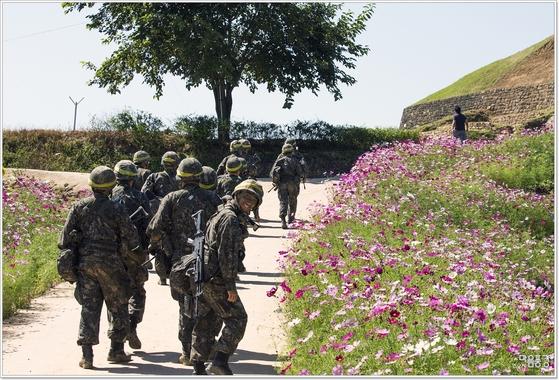 경기도 연천 호로고루성 해바라기축제