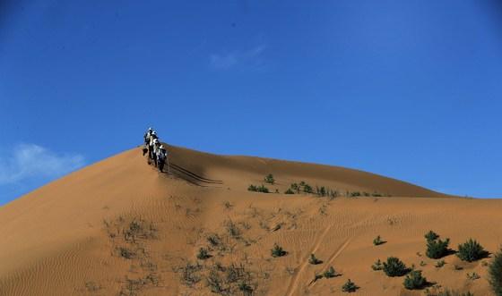 대한항공 직원 50여 명과 중국 현지직원 20여 명 총 70여 명이 참가해 18일부터 3일간 중국 네이멍구 쿠부치 사막에서 사막화 방지를 위한 조림사업을 펼쳤다. 오종택 기자