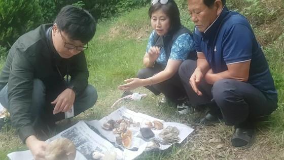 지난 15일 오후 경기도 남양주시 진접읍 철마산(해발 786m) 기슭. 국립수목원 김창선 연구사(왼쪽)가 버섯 채취객들이 캐온 야생버섯 가운데 독버섯을 감별하고 있다. 전익진 기자