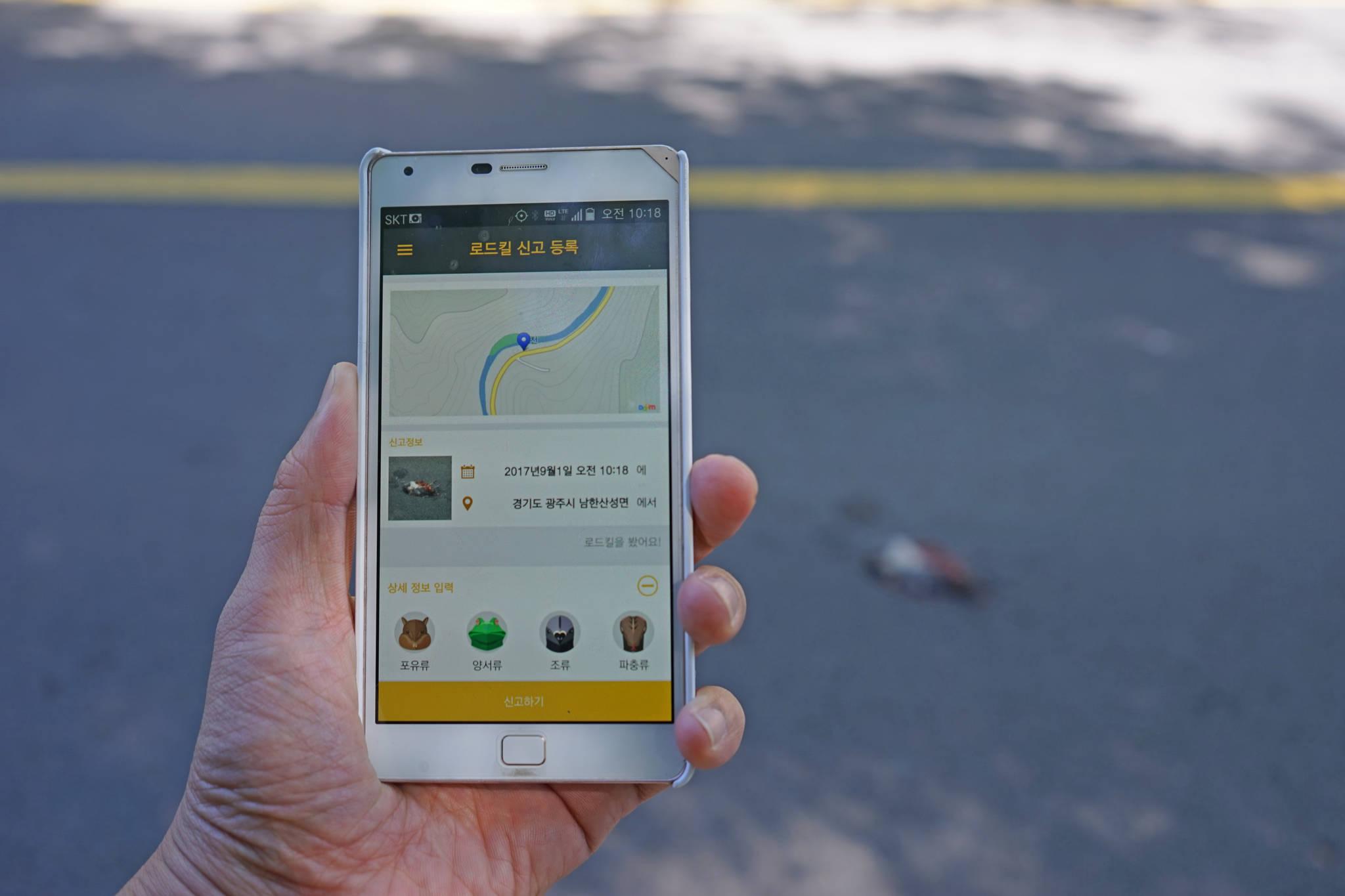 녹색연합 활동가가 경기도 광주시 남한산성면 도로에서 로드킬 방사체를 발견하고 '굿로드' 앱을 실행하고 있다. [사진 녹색연합]