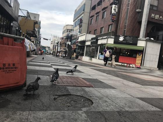 한때 중국인 관광객이 몰려 호황을 누렸던 제주시 연동 '바오젠 거리' 최근 풍경. 사람은 거의 안 다니고 비둘기들이 거리를 거닐고 있다. 최충일 기자