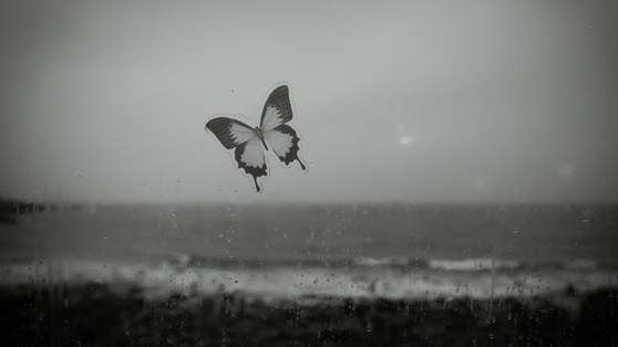 연전에 날씨와 날짜를 잘못 택한 실수 탓에 제주도 여행에서 폭우를 만났다. 비에 쫓겨 들어선 커피숍에서 젖은 카메라로 젖은 나비를 찍었다. 실수 덕에 얻은 한 컷이다. [사진 조민호]