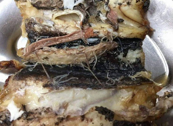 경기도 의정부 한 고교 급식 갈치구이 반찬에서 나온 고래회충 사진. [사진 독자]