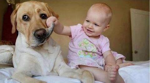 반려견에게 장난치는 아기 모습. [사진 유튜브 캡처]